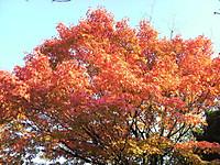 Autumn1_2